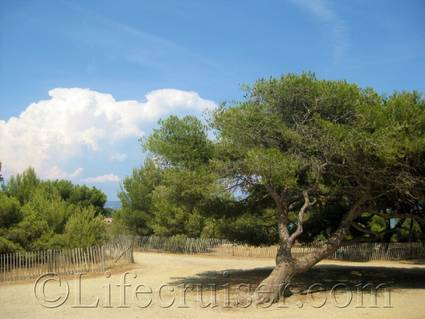 Tree at Gaou Isle, France
