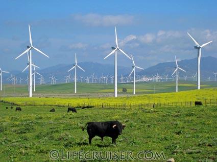 Lifecruiser photo Bull and Wind Power