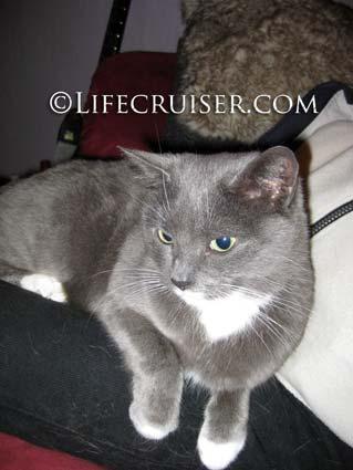 Lifecruiser photo Kari's cat in the knee