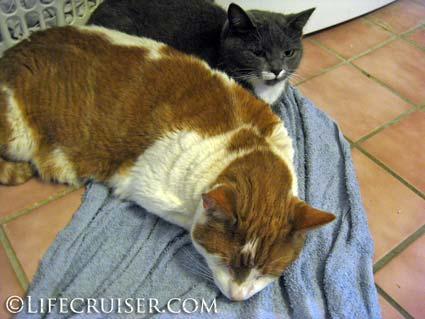 Lifecruiser photo Kari's cats cozy time