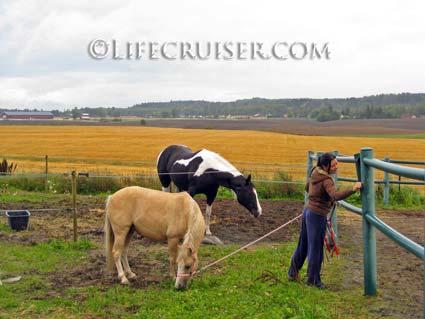 Lifecruiser photo Kari fetching horses