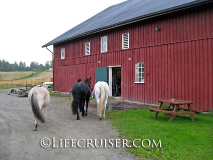 Lifecruiser photo Kari takes horses to stable