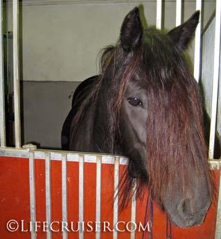 Lifecruiser photo Kari's horse