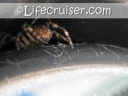 Lifecruisers theme Sad Spider home