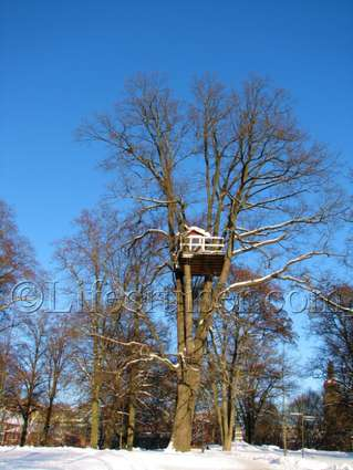 Unusual Hotel Woodpecker Treehouse from distance, Västerås, Sweden, Copyright Lifecruiser.com