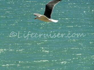 Lifecruiser wildflying dreams