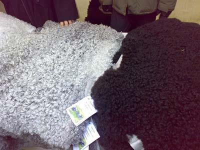 Sheep furs