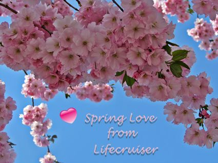 Cherry blossom spring love lifecruiser