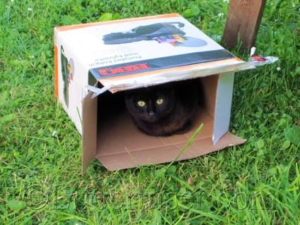 Cat in Box, Gotland, Sweden