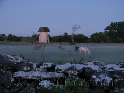 Horses in magic evening fog, Fårö island, Gotland, Sweden