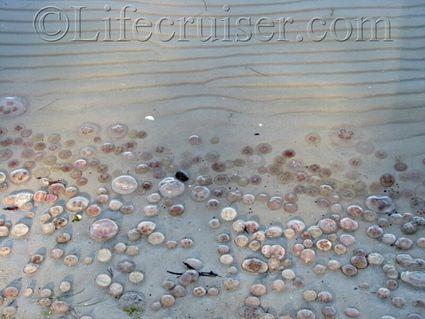 faro-jellyfish-rocks-beach, Baltic Sea, Sweden