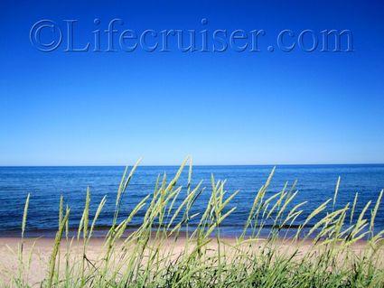 Beach grass, Norsta Aurar Beach, Gotland, Sweden
