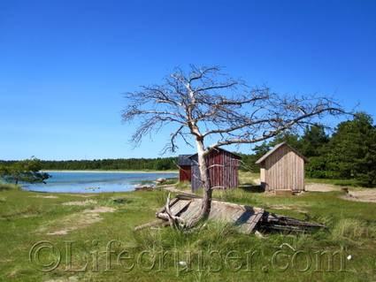 Fårö Skalasand Tree