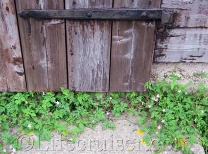 gotland-creeping-into-door, Sweden