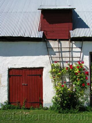 Gotland farm wall with red roses, Sweden