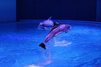 Kolmården Dolphin Show