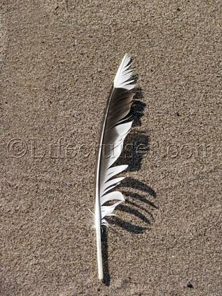lifecruiser-beach-feather