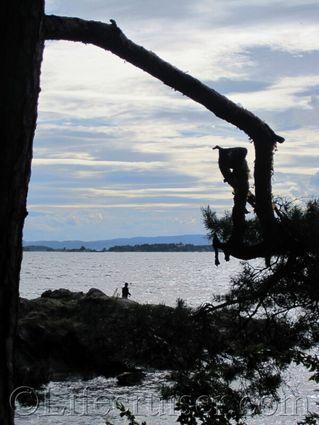 Norwegian tree trolls owl nest