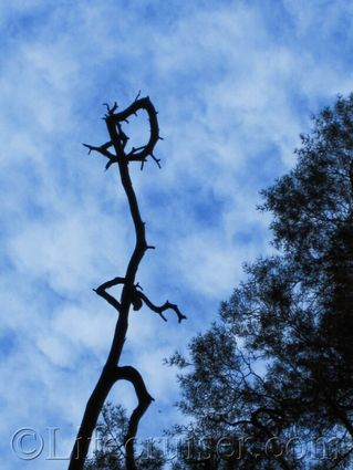 Norwegian tree troll in sky
