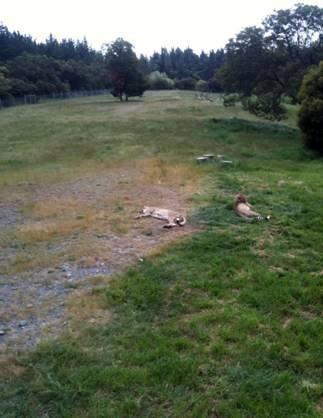 nz-orana-wildlife-park1