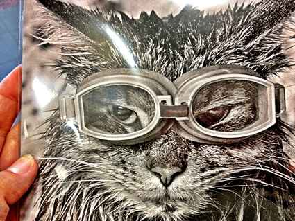 Postcard cat in diving goggles
