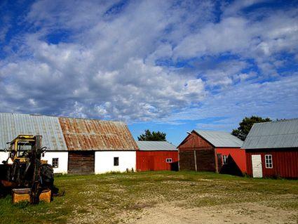 Sweden: Gotland holiday farm afternoon