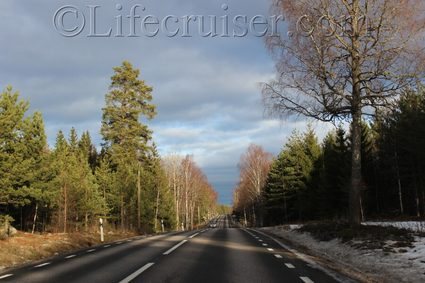 Sweden: Swedish road surrounded by trees