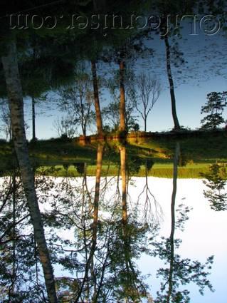 se-upsidedown-mirror-trees