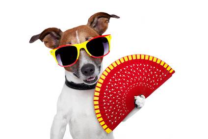 Spanish dog with fan