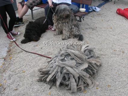 world-dogs-italian-bergamasco-pile